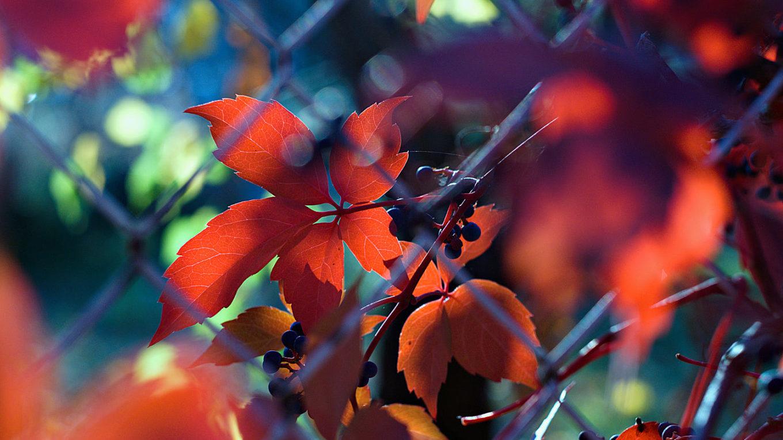 scene of fall